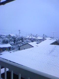 23.1.25またまた雪.jpg