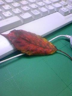 23.10.24葉.jpg