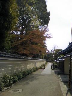 祇園界隈23.4.21.jpg