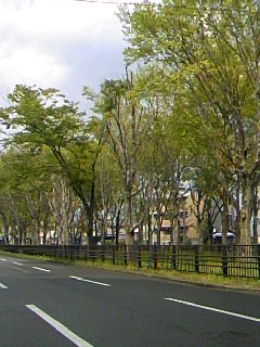 紫明通りの新緑23.4.25.jpg