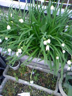 家の花23.4.26.jpg