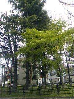 23.5.3紫明通りの翠.jpg