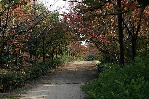 秋の散歩道10.28.jpg